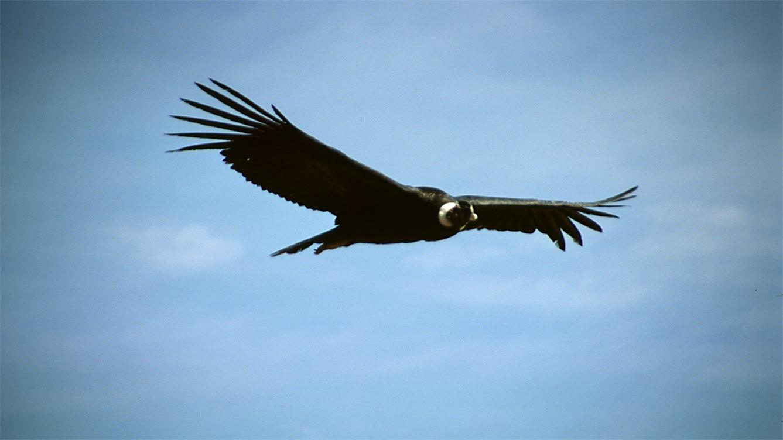 Mirador del Condor Cusco 1D